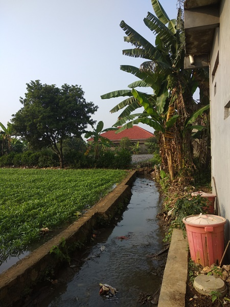 Irrigation canal at the back door
